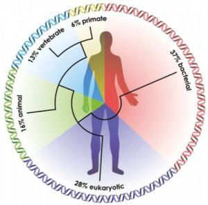 Sources of Human DNA Evolution