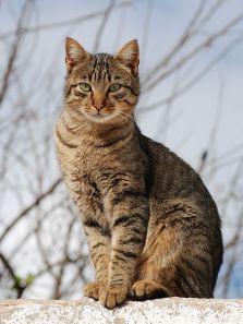 640px-Cat_November_2010-1a