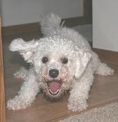 Barking-Dog-cdedbdme