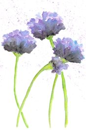 flowers Lax 1