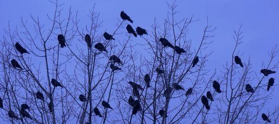 Blue Dusk Birds