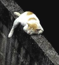 Cat sleeping on a fence
