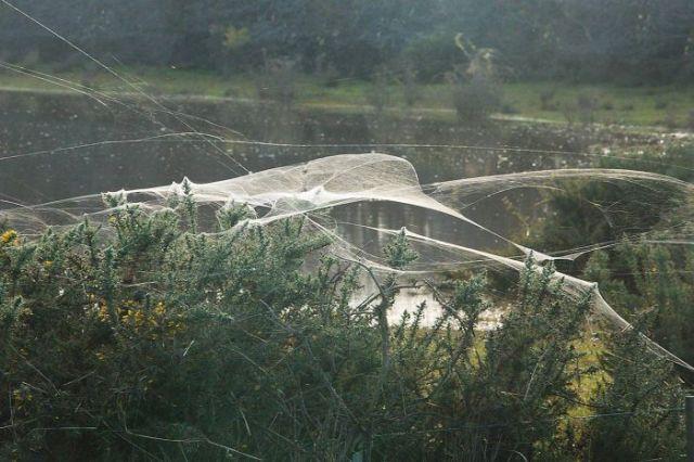 Spider Silk Tasmania