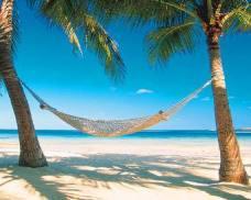 hammock between palms