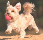 mutt-dog-mutt-day