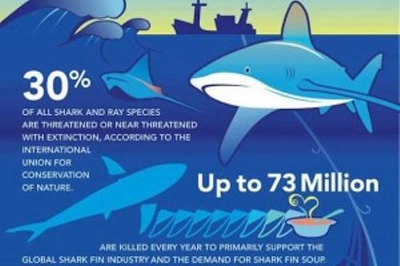 Shark Awareness Day facts