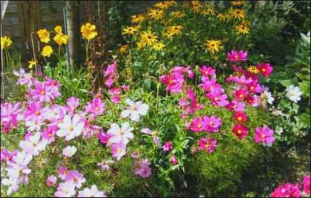 summer_flower2
