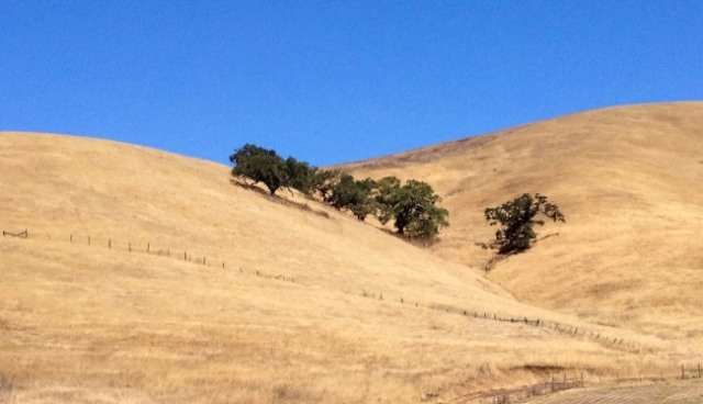 California dry hills