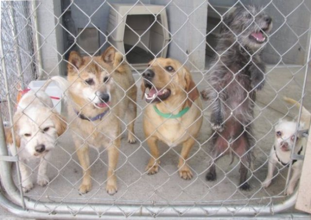 dogs in shelters 2