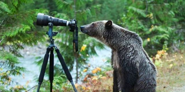 o-GRIZZLY-BEAR-PHOTOGRAPHER-facebook