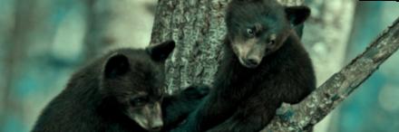 baby-black-bears-crop