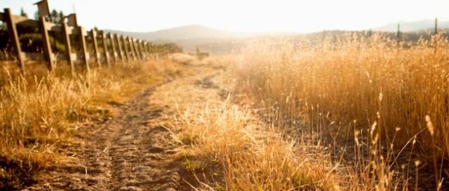 long_dry_grass_along_dirt_road