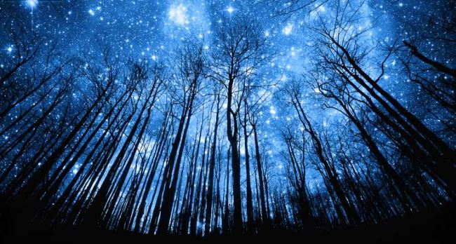 night-trees-and-stars