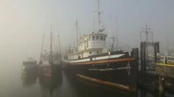 srevenson-harbor-bc-in-fog