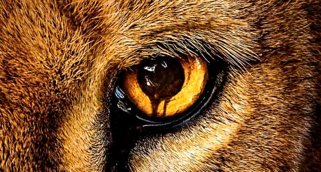 wild-eye-zoo-poster