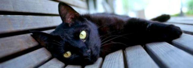 black-cat-lying-down
