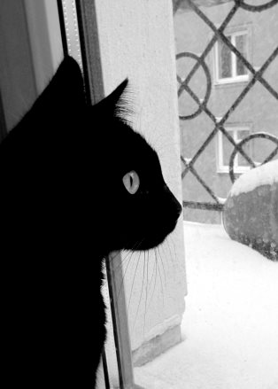 black_cat_and_the_white_snow_by_lenigro-d34cd9z