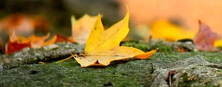fallen-leaves-on-stone-wall