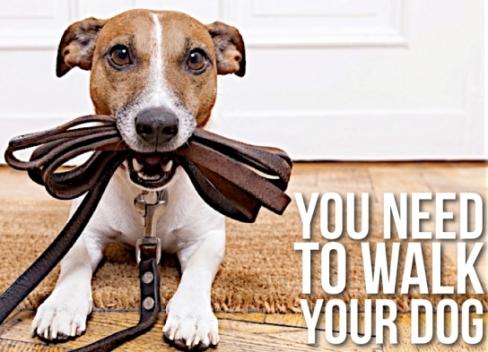 walk-your-dog