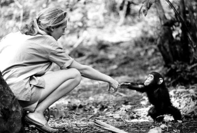 jane-goodall-with-chimpanzee