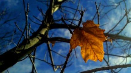last-autumn-leaf