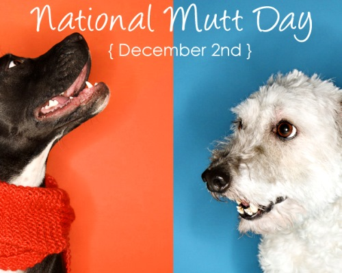national-mutt-day