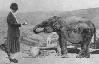 julia-morgan-w-elephant-at-hearst-castle