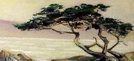 monterrey-cypress-by-chas-penez
