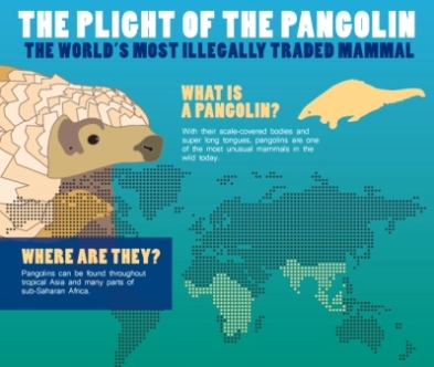 pangolin-day-info-poster