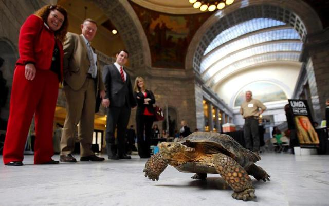trucker-the-desert-tortoise-advocating-for-museums