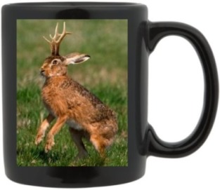 TCS: Yes, Virginia, There Really IS a Jackalope! | Flowers For Socrates